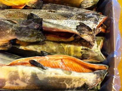圖片 鮭魚代工