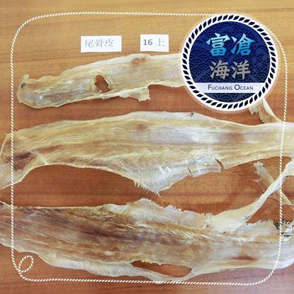 魚翅-尾骨皮